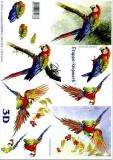 3D-Bogen Papagei von LeSuh (4169136)