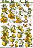 3D-Bogen Zitronen & Orangen von Nouvelle (8215323)