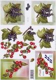 3D-Bogen Kirschen & Beeren von Nouvelle (8215145)
