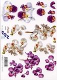 3D-Bogen Orchideen von Nouvelle (821591)