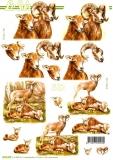 3D-Bogen Wildschafe von Nouvelle (8215428)